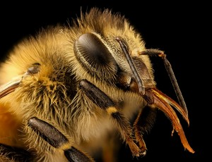 A few difficult questions about bees